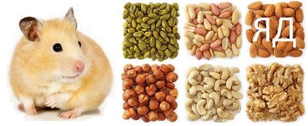 Орешки для хомячков